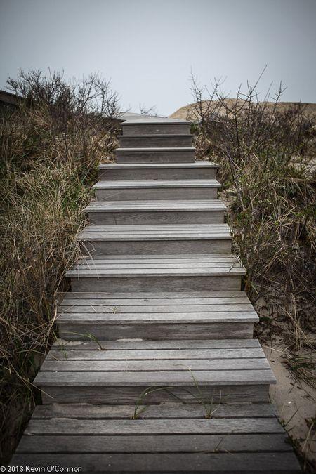 jersey-shore-rebuilds-Dune-Grass-resoration